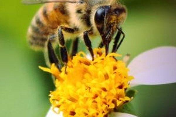 Aj včely majú niečo, čo sa prirovnať k emóciám.
