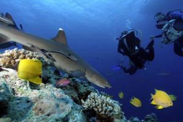 Oceánom hrozí veľké vymieranie. Môže za to aj nadmerný rybolov.