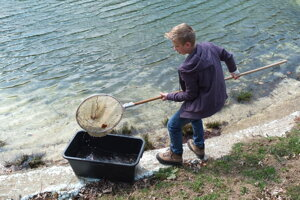 V Bielych Karpatoch tiež prenášali žabie vajíčka z vypúšťanej nádrže do prírodného toku.