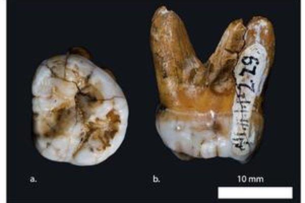 Ľudia majú ďalšieho predka. Krížili sa nielen s neandertálcami ale v prípade Melanézanov aj s novoobjavenou skupinou Denisovanov z Ruska. Dokazujú to DNA a nálezy malíčka a zuba.