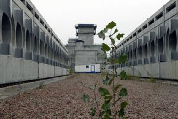 Neďaleko zakonzerovanej elektrárne Černobyl sa opäť objavil život.