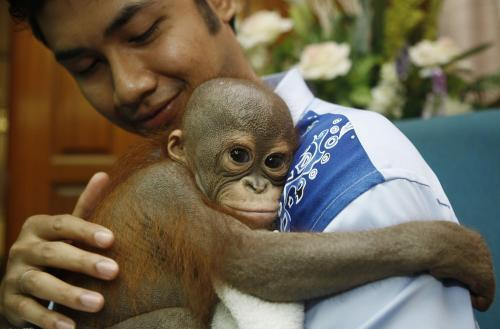 orangutancok2_tasrap.jpg