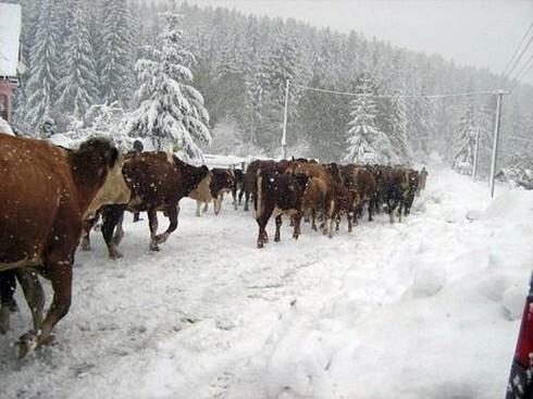 dobytok1.jpg