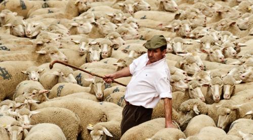 ovce-v-madride4_tasrap.jpg