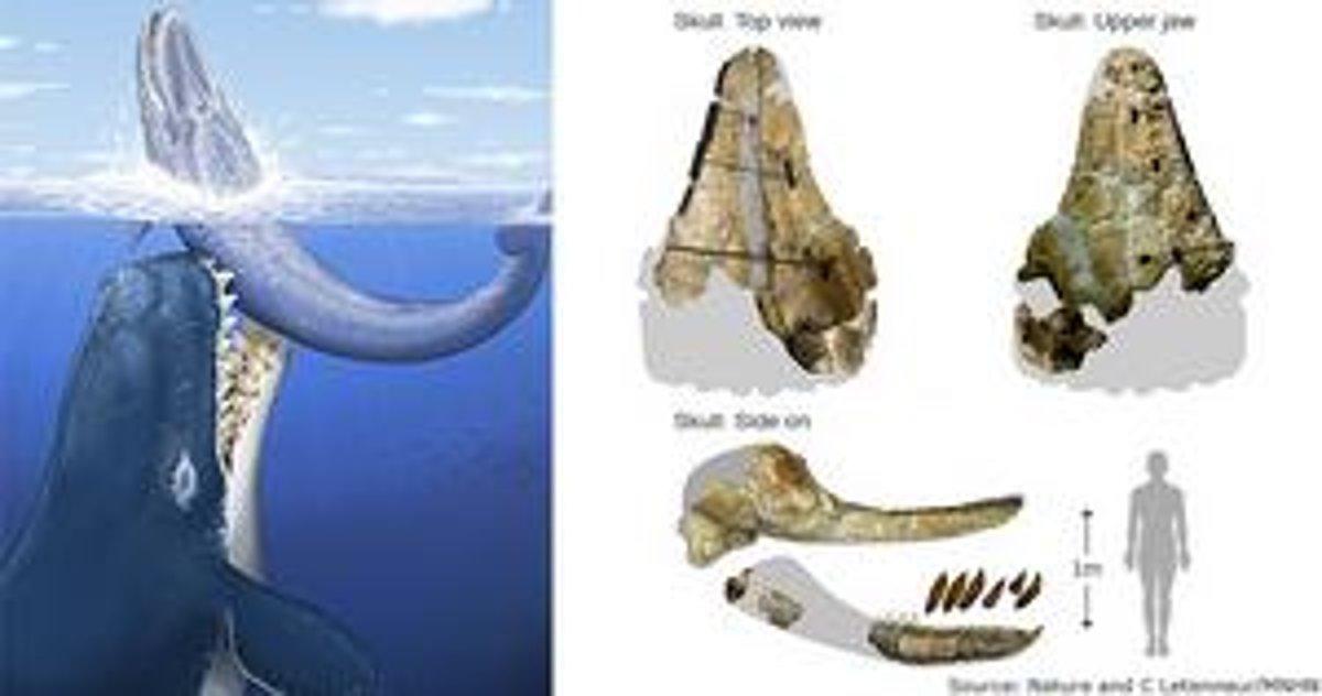 Ako veľký je veľryba Dick