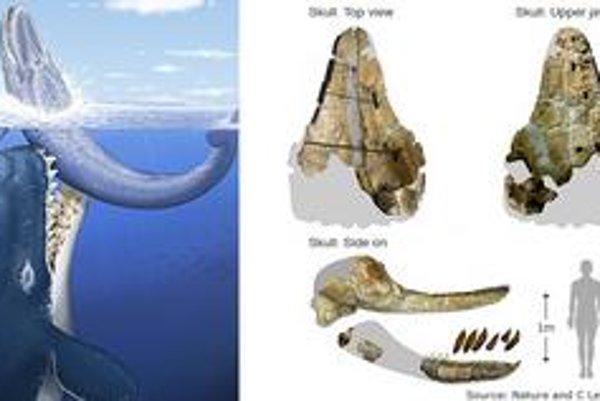 Pred miliónmi rokov bola superdravcom veľryba.