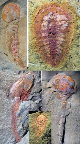 fosilie_1_ap.jpg