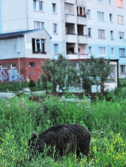 diviaky3.jpg