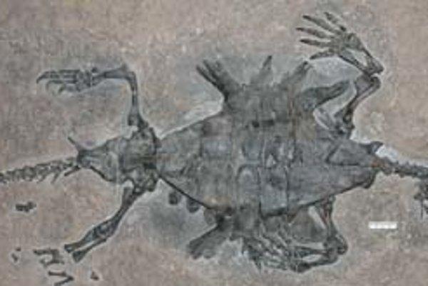 Fosília korytnačky z Číny.