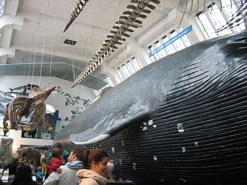 muzeum_prirodove_r626.jpg