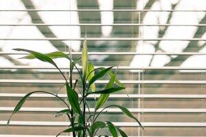 Kým sa pustíte do samotného umývania okien, zbavte ich okolie prachu a pavučín. Umývanie zaprášených okien je oveľa náročnejšie, spotrebujete pri ňom viac vody a zaberie vám viac času.