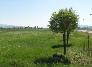 Aj na miestach, kde teraz ešte rastie tráva, vyrastie nový závod.
