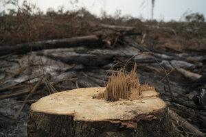 Odlesňovanie amazonského dažďového pralesa, ktoré sa stupňuje, je jedným z príkladov, ako človek vykorisťuje planétu.