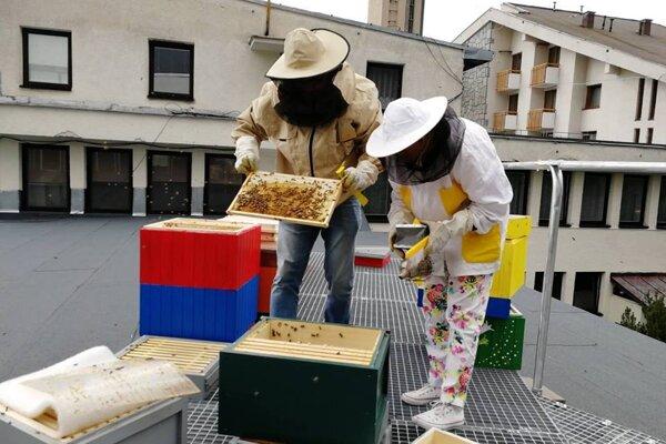 Včelie úle na streche hotela.
