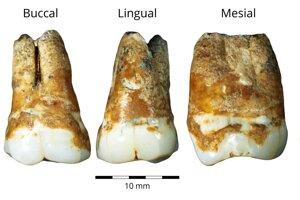 Horné a dolné stoličky nájdené v jaskyni Manot, ktoré sú datované do obdobia pred 38-tisíc rokmi.