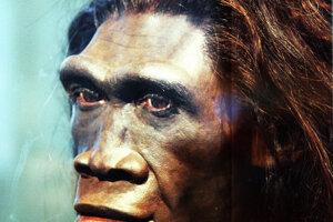 Rekonštrukcia dospelej ženy Homo erectus.