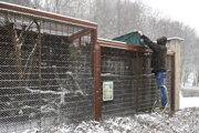 Zoológ zakrýva voliéru plachtou kvôli možnému preniknutiu vtáčieho trusu do voliéry z prelietajúcich vtákov.