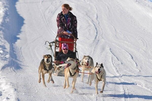 Podujatie Snežné psy.