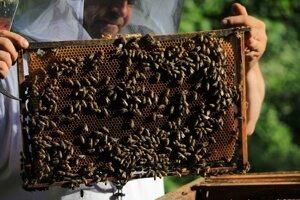 Včely a včelárov trápi klíma, choroby aj parazity. Potrebujú systémovú zmenu.