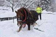 V Nesluši pomáhal pri kalamitách aj ťažný kôň.