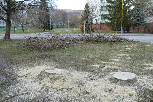 Výrub stromov na ulici Mirka Nešpora.