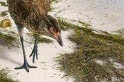 """Umelecké zobrazene """"zázračného kuraťa"""" v jeho prirodzenom prostredí. Vták zrejme vážil okolo 400 gramov a žil na pobrežiach krátko pred pádom asteroidu."""