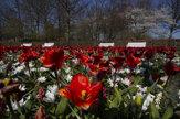 Vädne aj kvetinový priemysel. Známa tulipánová záhrada je prázdna