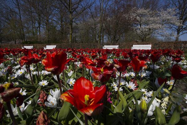 Tulipány sú v plnom kvete, ale turisti musia zostať doma.