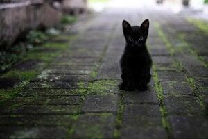 Medzi zvieratami je čierna farba výnimočná.