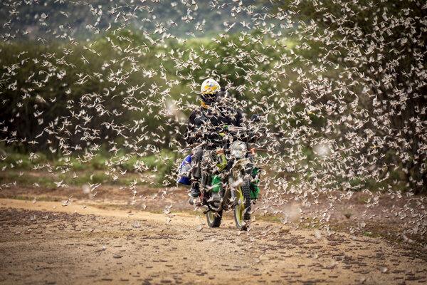 Muž prechádza motorkou cez roj Sarančí v Keni.