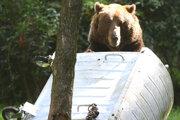Medveď chodí na odpadky.