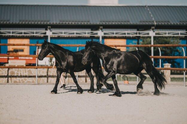 Nestville Horses.