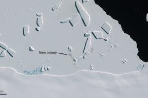 Kolónia objavená pri Cape Gates v Zemi Marie Byrdovej na juhozápade Antarktídy.