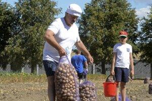 Prezident Lukašenko pri zbere zemiakov na poliach okolo hlavného mesta v roku 2015.