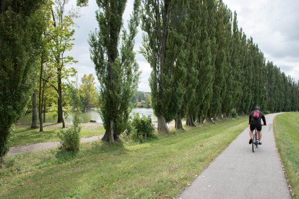 Topoľová alej medzi parkom a riekou.