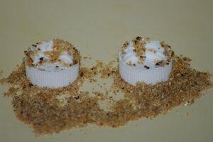 Druh mravcov z Južnej Ameriky sa dokáže pomocou piesku vyhnúť riziku utopenia a získať z vrchnákov potravu.