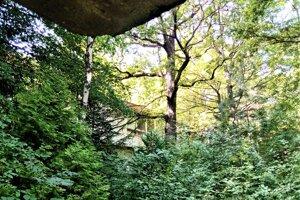 Bývalé kúpeľné stredisko obkolesuje les. Pre stromy budovy takmer nevidieť.