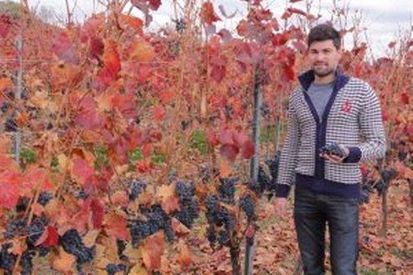 Samuel Waldner z Vinárskych závodov v Topoľčiankach pózuje pred jesenným viničom.