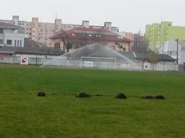 Skúška nového zavlažovacieho systému na štadióne Ladislava Gancznera vNových Zámkoch.