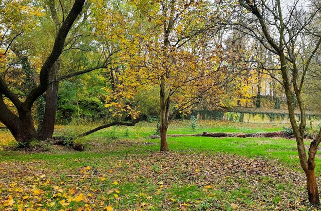 Nadácia VÚB vspolupráci smestom Bratislava pomohla rozbehnúť prvé revitalizačné práce s cieľom zachovať a verejnosti sprístupniť dlhodobo uzavretú záhradu Prüger-Wallnerovcov pri Horskom parku.