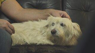 Pes môže nahrádzať nefungujúce a neexistujúce vzťahy