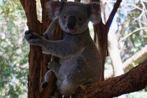 Jedineční obvyvatelia Austrálie.