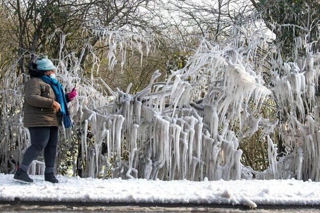 Zamrznuté konáre stromov na okraji Londýna.