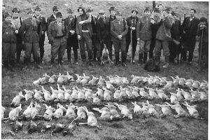 Výrad ulovenej zveri v roku 1977.