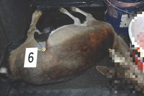 V aute našli mŕtveho daniela.