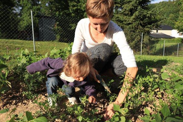 Pri vysievaní fazule pomáha Františke aj malá neter.