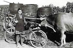 Suchá nad Parnou bola kedysi známa ako chýrna vinohradnícka obec.