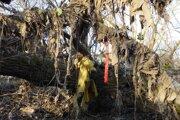 """Stromy pri Hornáde ostali po októbrových záplavách """"ozdobené"""" odpadom ako vianočné stromčeky."""