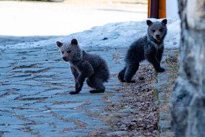Medvieďatá mladému fotografovi ochotne zapózovali.
