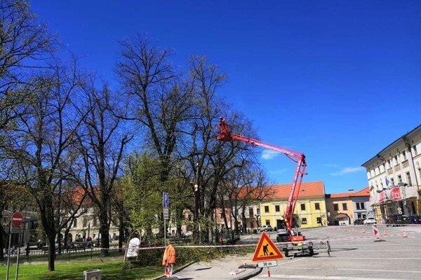 Vyrúbané stromy nahradia nové, sľubuje mesto.
